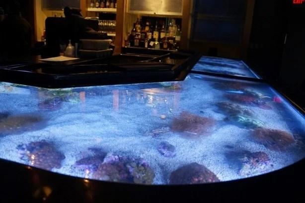 Balcão no bar do Shark Underwater