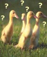 duclings1