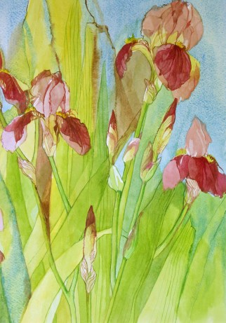 Red Brown Iris
