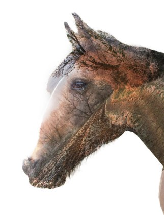 Horse Head Double Exposure
