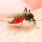 naymuk malaria