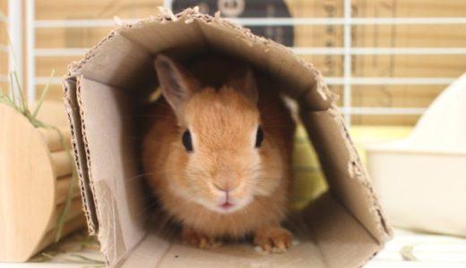 手軽にできるウサギ冬の寒さ対策!朝晩冷える10月から気をつけてあげて!