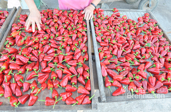 Sun drying of red pepper, Mallorca, Spain