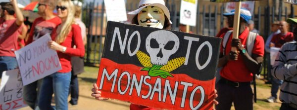 South Africa Monsanto protest