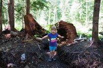 Evelyn loves big trees ;)