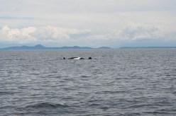 WhaleWatching071220135
