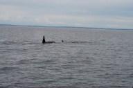WhaleWatching071220137
