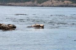 WhaleWatching071220139 (1)