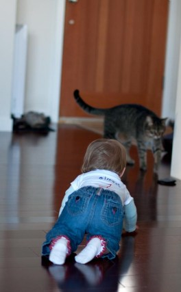 """""""I shall be an Olympic Cat Chaser."""" Thankfully she's still slower than Frank..."""