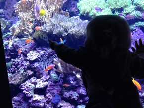 and we went to the Aquarium! Oh, boy, she LOVED it!