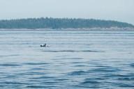 Found some orcas!