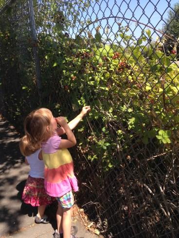 Did some blackberry picking in Jack Block Park