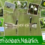 Oberfischbach.Natürlich.