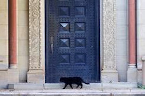 Feral black cat stalking Oberlin College headquarters.