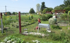 Legion Community Garden Faces Uncertain Future