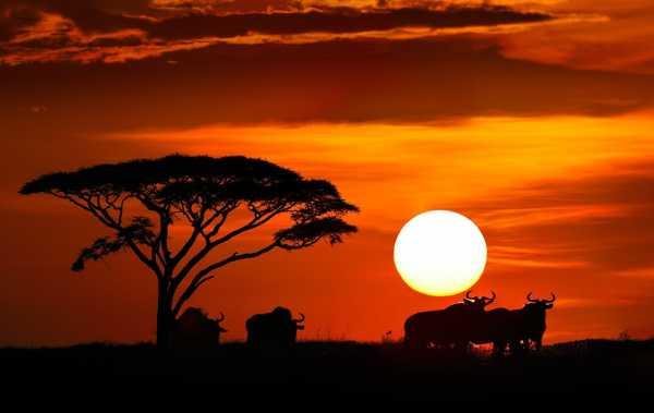 Картинки для детей закат солнца – Картинки восход солнца ...