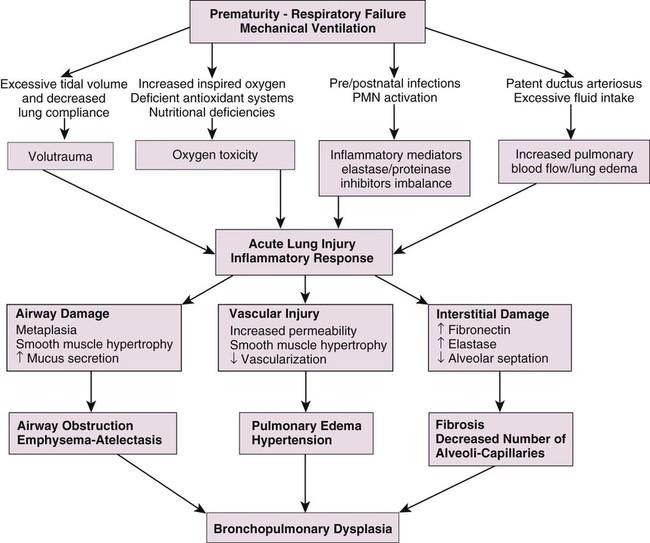 Bronchopulmonary Dysplasia In The Neonate