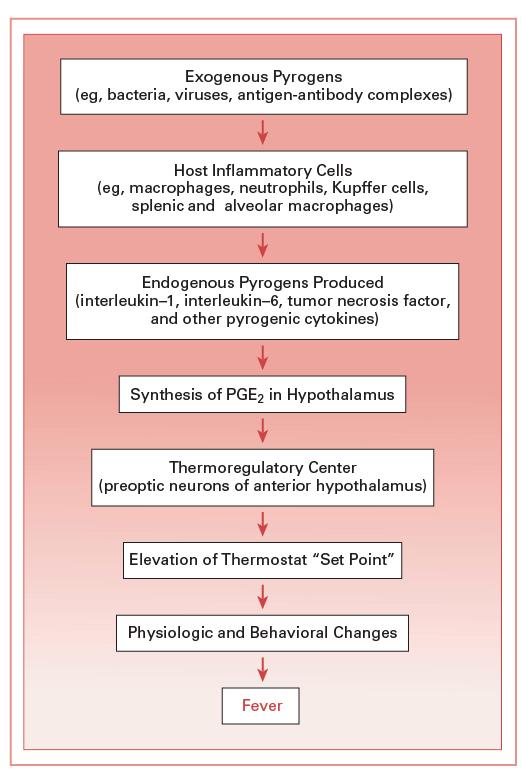Cholesteatoma | Obgyn Key