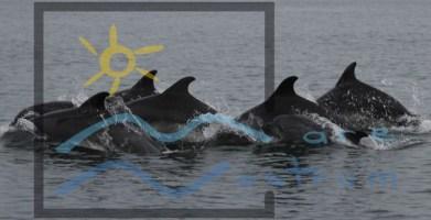 adopta un delfin (4)
