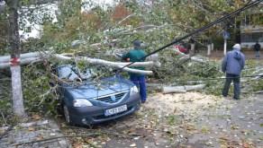 slobozia - copac cazut peste masina- 02