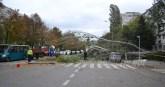 slobozia - copac cazut peste masina- 04