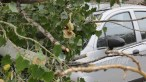 slobozia - copac cazut peste masina- 11