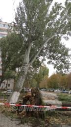 slobozia - copac cazut peste masina- 17