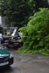 copac cazut slobozia 07