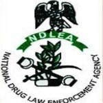NDLEA Arrests 236 Drug Dealers In Anambra