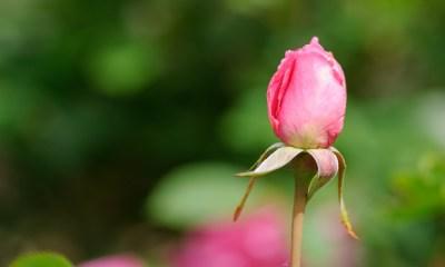 Что значит иметь намерение ради Всевышнего Аллаhа