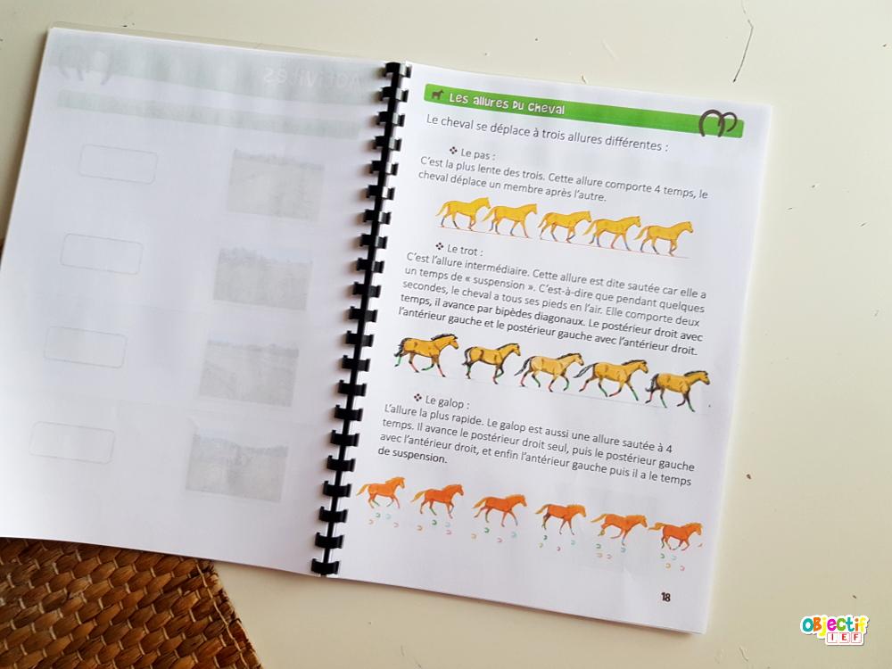 activités sur les chevaux objectif ief livret gratuit support fichiers cheval équestre instruction en famille