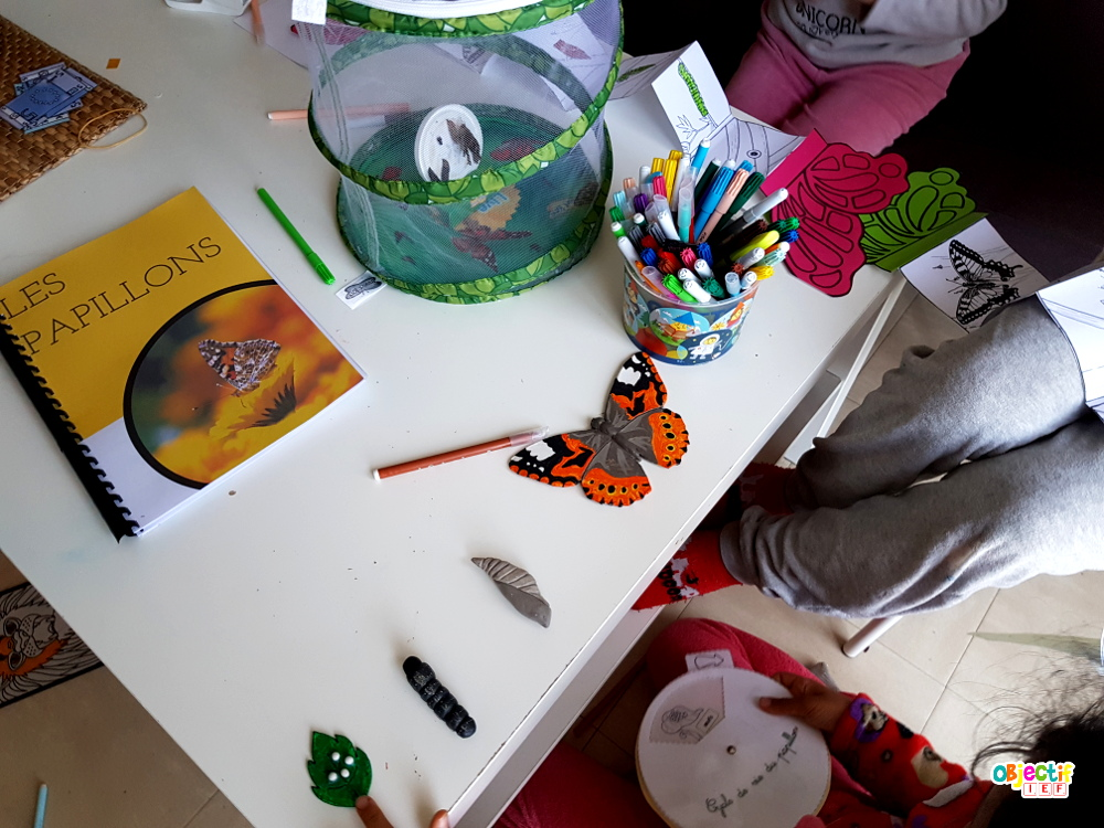 élevage papillons expérience insect lore amazon belle dame ief projet DDM découverte du monde cycle de vie Instruction en famille