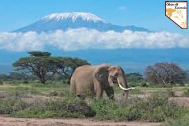 Pourquoi choisir la Tanzanie avec Objectif Tanzania - Trekking Safari prive de luxe sur mesure en Afrique de l'est a la frontière du Kenya