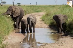 Quel safari choisir en Tanzanie pour un safari prive de luxe sur mesure avec Objectif Tanzania
