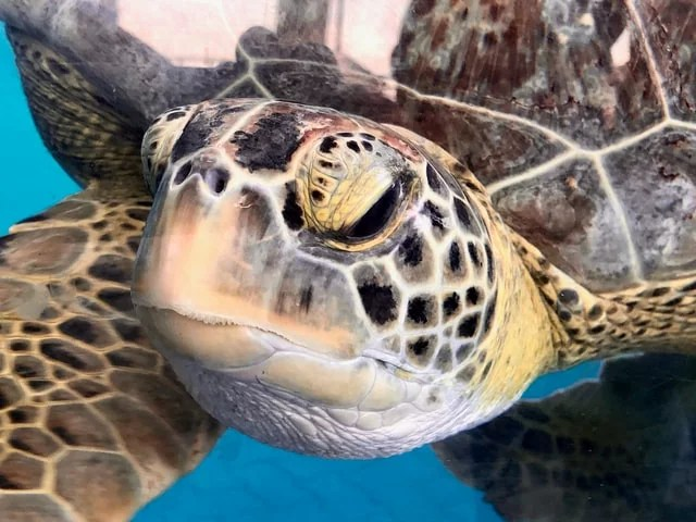 tortue blogueuse
