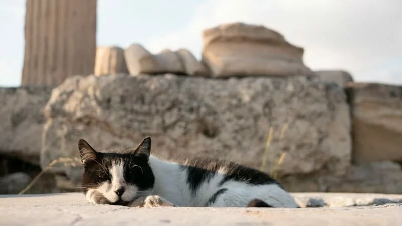 Chat Acropole Athenes