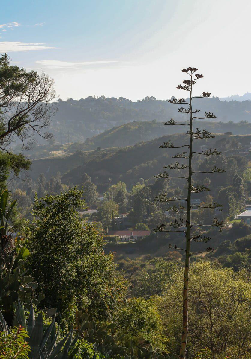 Vue depuis Griffith Park 7