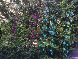 Les guirlandes de fleurs séchaient dans la haie !