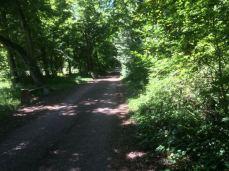 le petit chemin forestier fait le tour du parc