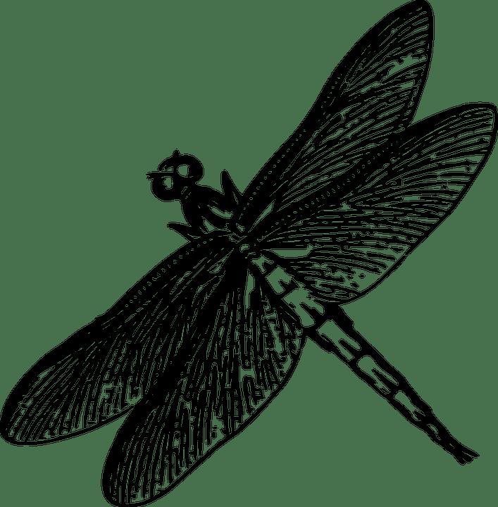 dessin illustration Libellule noir et blanc