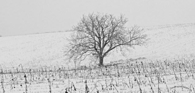 neige 2012 003 copie