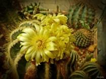 cactus saint astier pinlou (111)