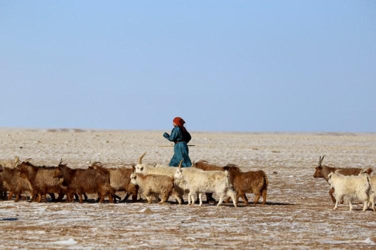 Gobichevres2 - Mongolie