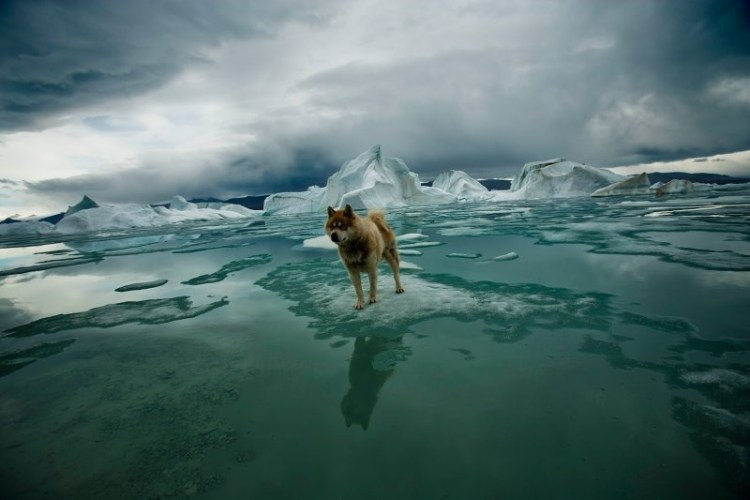 exposition arctique