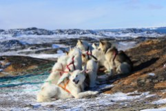 dogsledding7