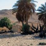 Egyptian_Desert_web