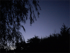 Dohle-night-sky-web