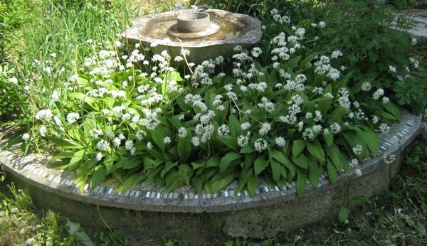 Začinski vrt sa srijemušem iz zagrebačke Dravogradske ulice (Snimio Miljenko Brezak / Acumen)