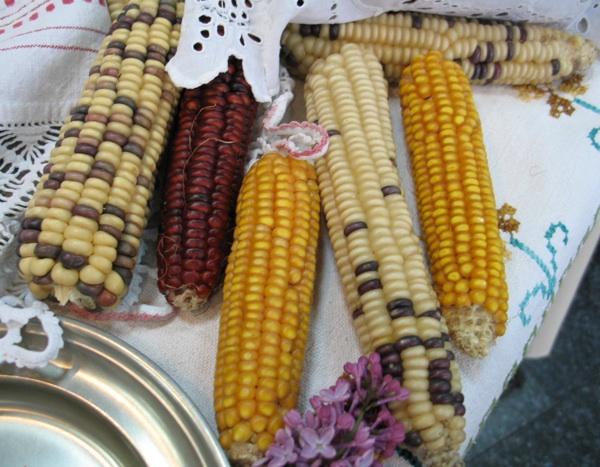 Sve boje kukuruza u Zagorju (Snimila Božica Brkan / Oblizeki)