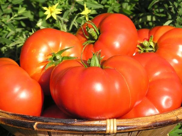Za sušenje valja odabrati zdravu rajčicu obično sitnijih sorta (Fotografija Jasna Sirotin)